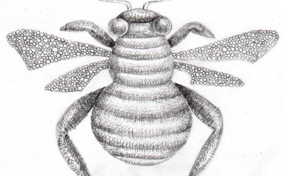 Honeybee, Beth Hemmila (Hint